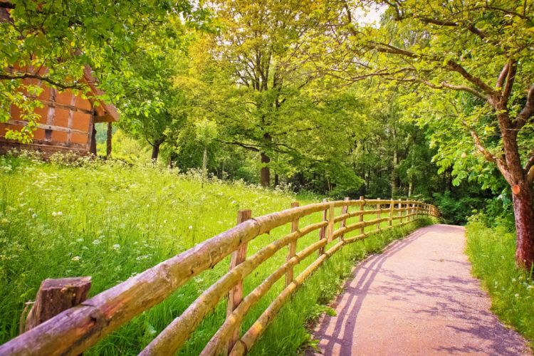 road shadow fence wood trees grass green house summer nature wallpaper