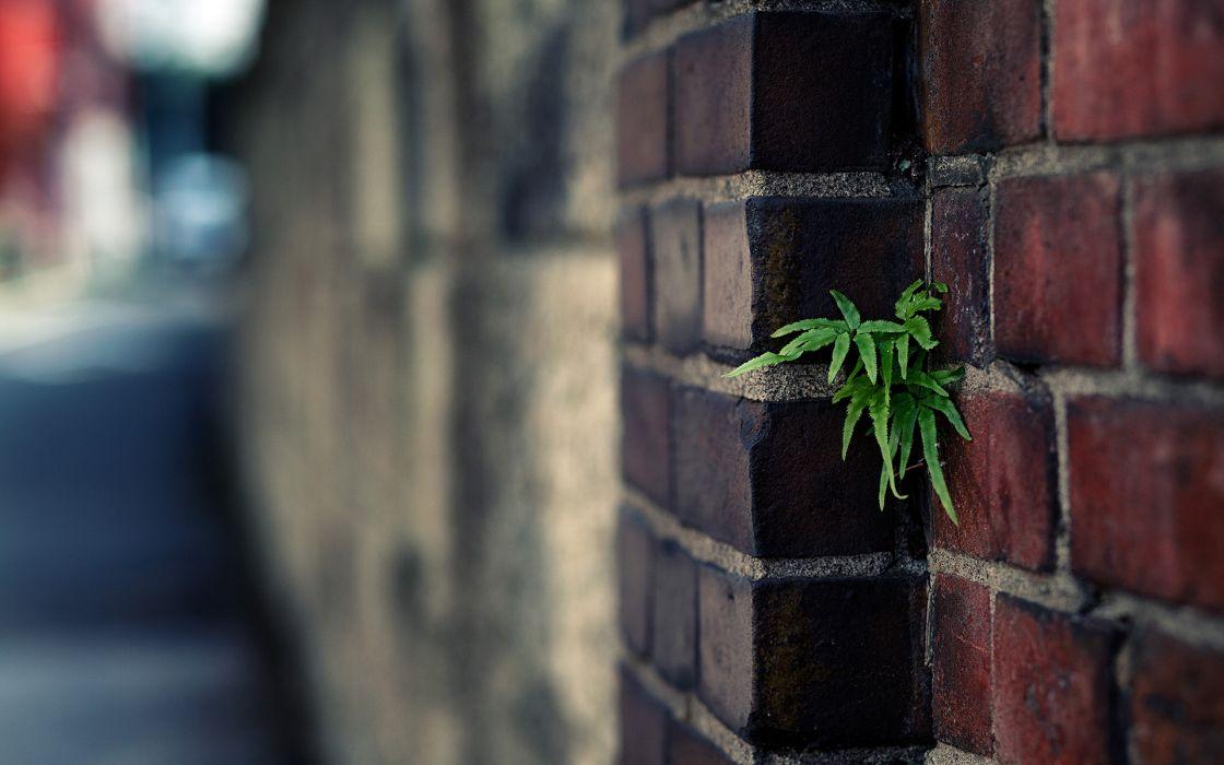 Leaves Brick Wall Wall bokeh wallpaper