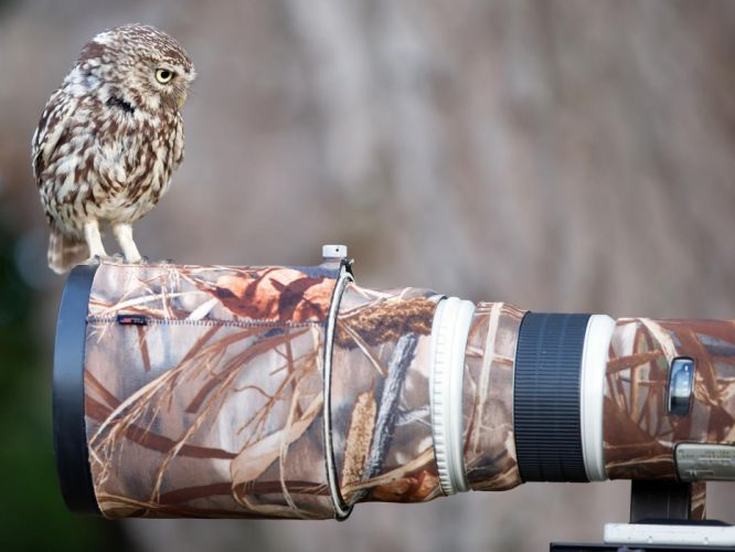 Owl Bird Camouflage Camera DSLR wallpaper