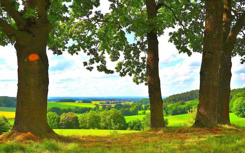 trees fields horizon landscape wallpaper