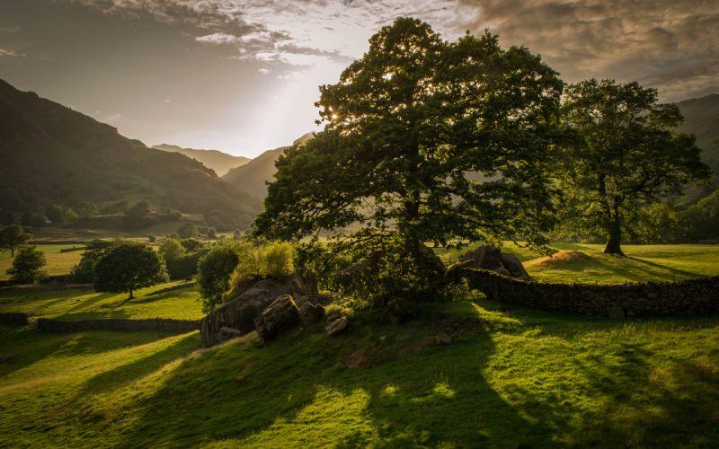 Trees Landscape wallpaper