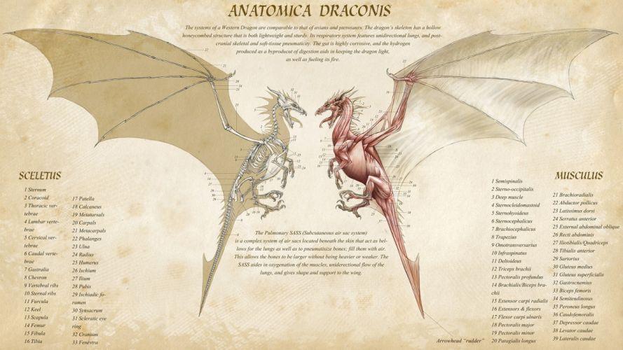 Dragon Anatomy wallpaper