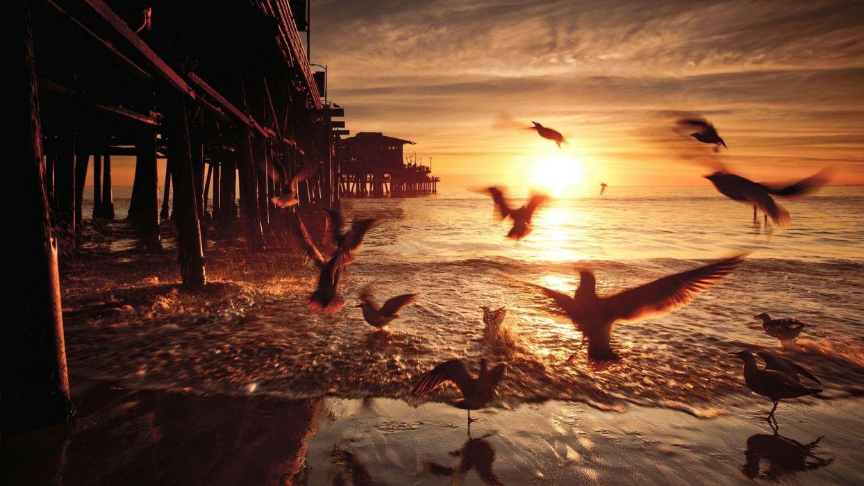 SeagullsBirds Pier Sunset Ocean Beach Shore wallpaper