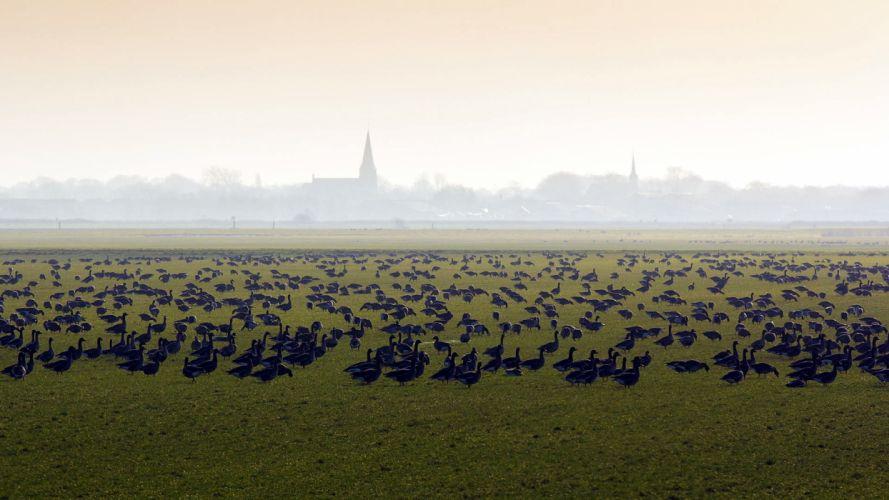 field birds mist nature landscape bokeh fog wallpaper