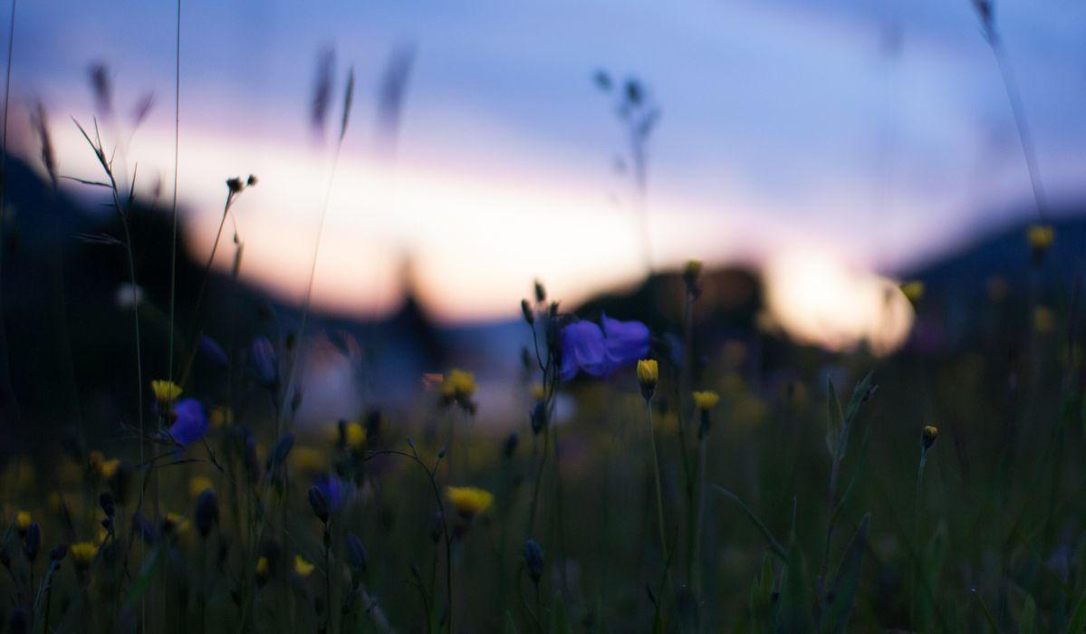 Field yellow blue flowers macro blur glare night sunset nature bokeh wallpaper