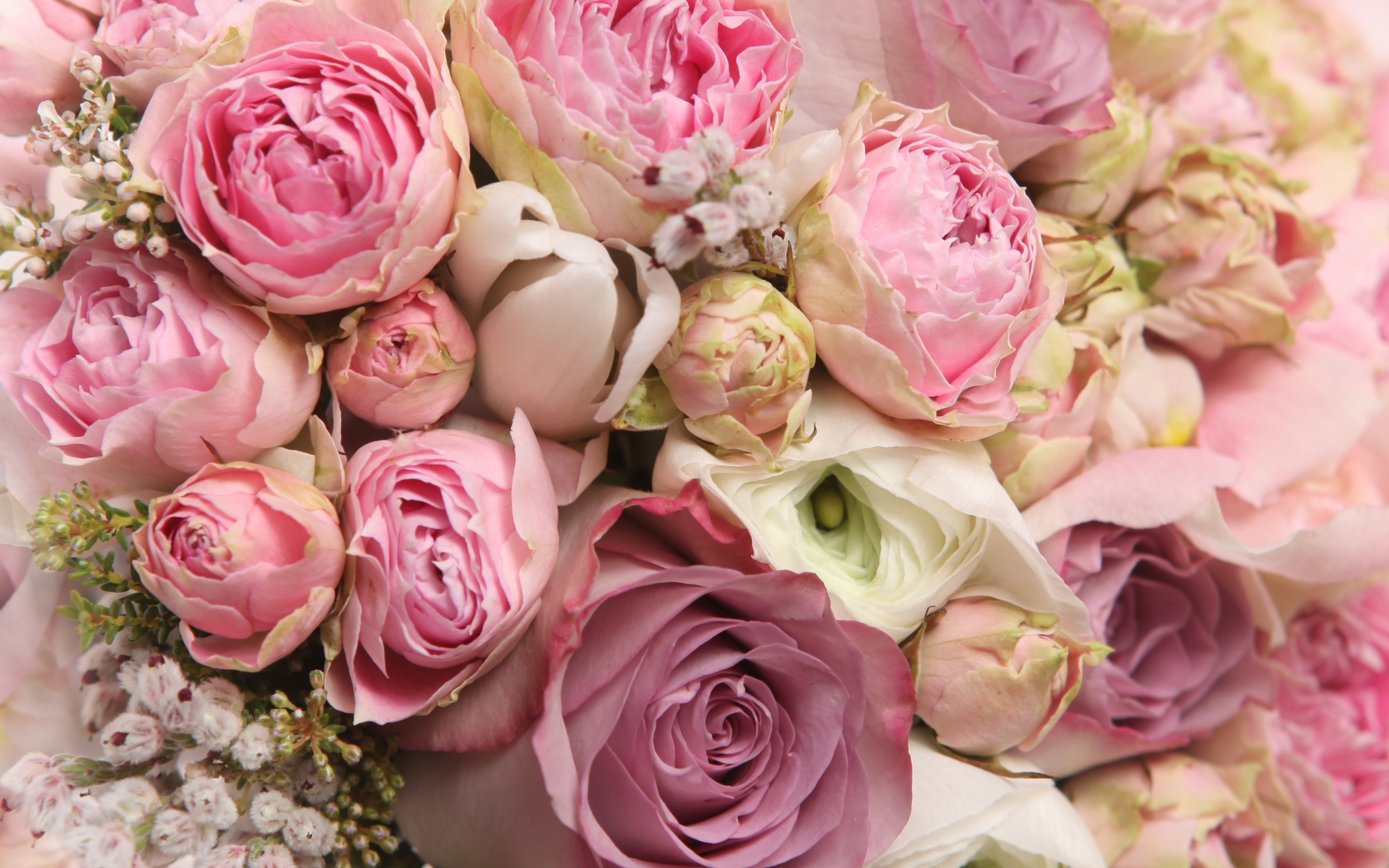 Flower Flowers Rose Roses Bouquet Beautiful Cool Nice Lovely Pretty Beauty Romance Romantic Wallpaper