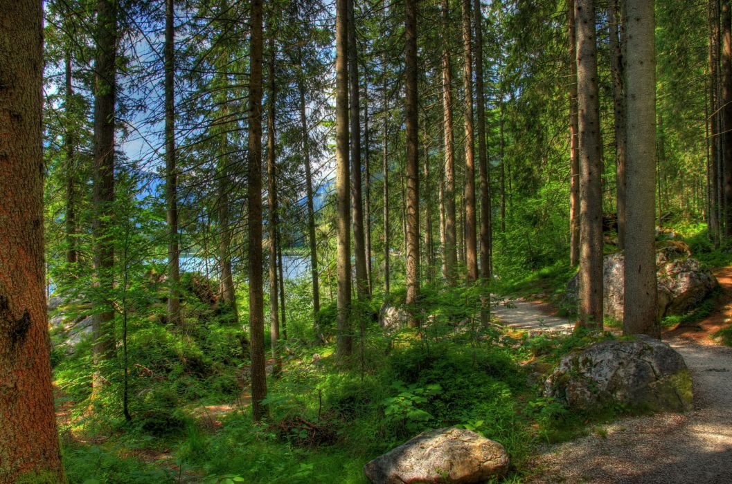 Forest Germany Bavaria Trees Nature hdr wallpaper