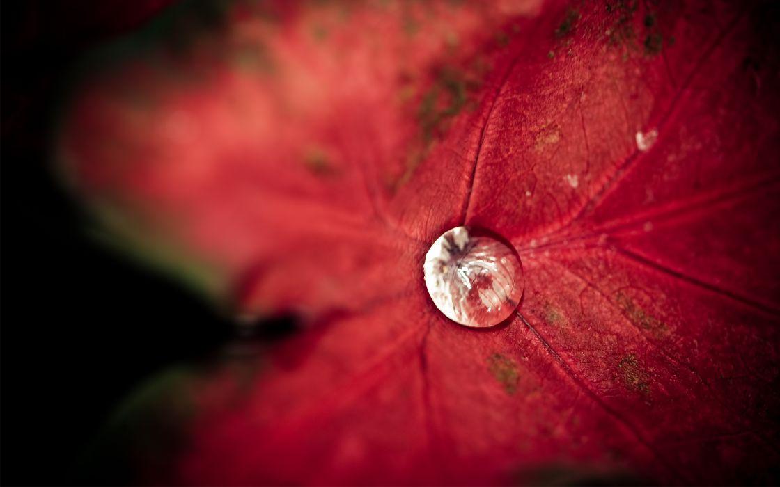 leaf  drops  water  dew bokeh wallpaper