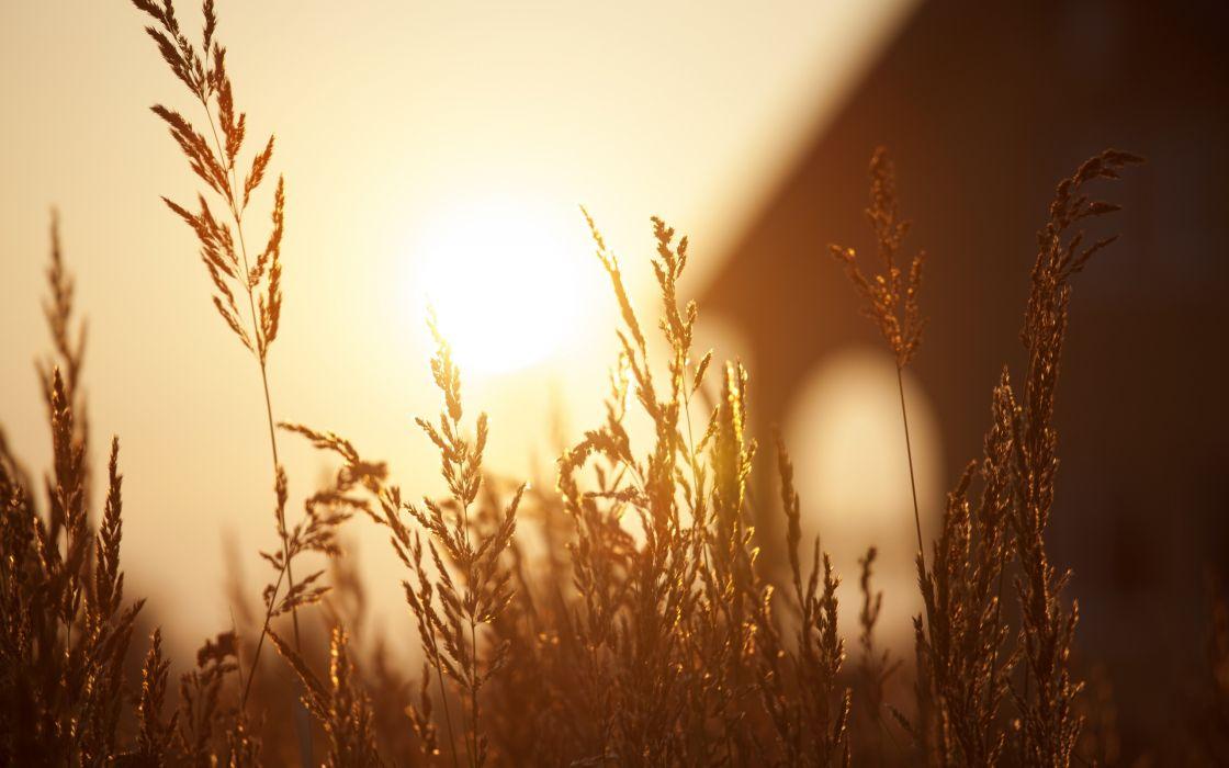 beautiful sunset field bokeh grass wallpaper
