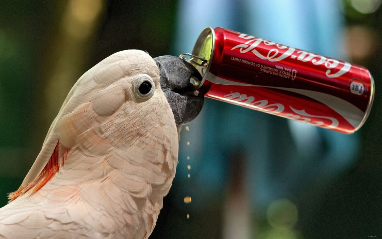 cockatoo parrot Coca-Cola cola funny humor cute wallpaper