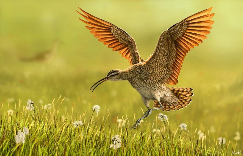 art bird grass wings nature wallpaper