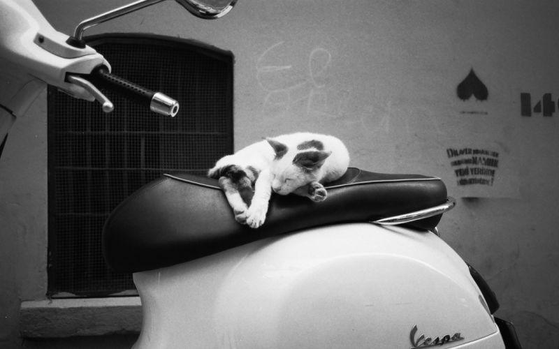 Scooter Cat wallpaper