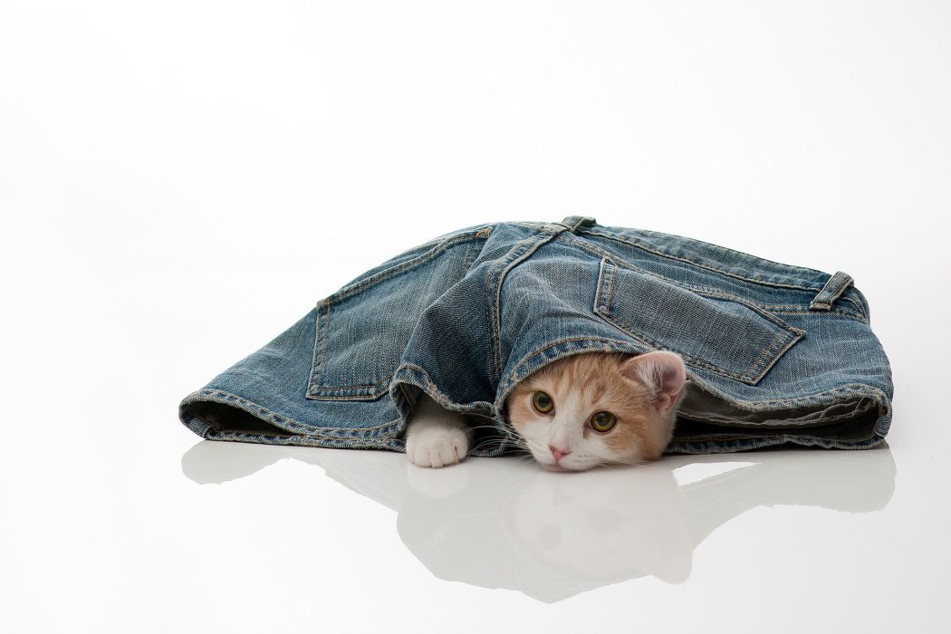 Cats Jeans Shorts Animals cat kitten kittens cat wallpaper