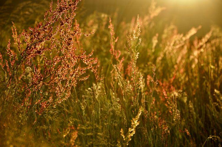 grass light glare summer wallpaper