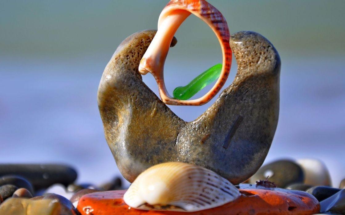 beach shells shells bokeh wallpaper