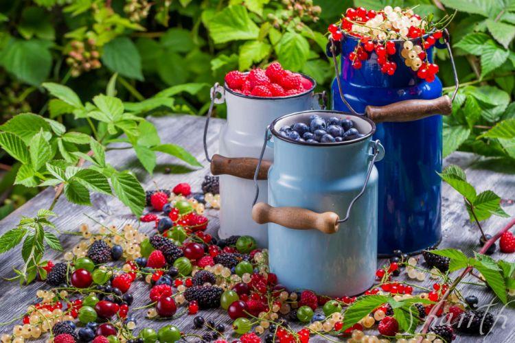 berries golubmka raspberries currants gooseberries blackberries cans vitamins wallpaper
