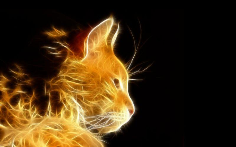 photoshop light rays cat cats fractal wallpaper