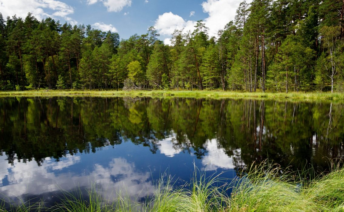 river forest trees reflection lake wallpaper