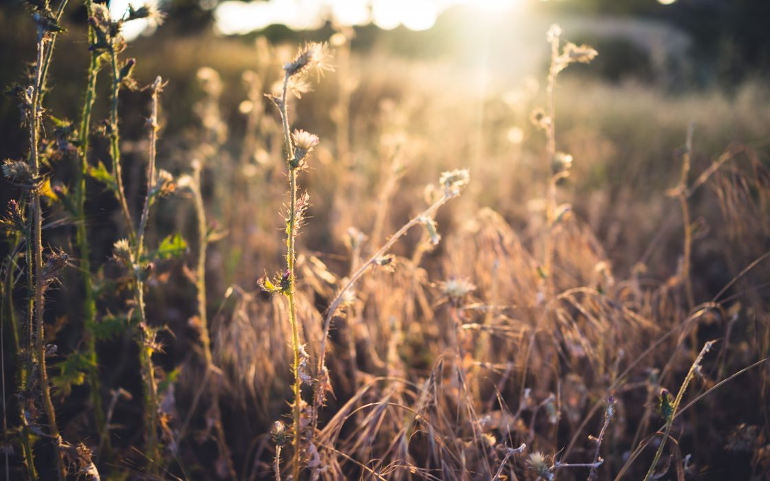 Plants Sunlight bokeh wallpaper