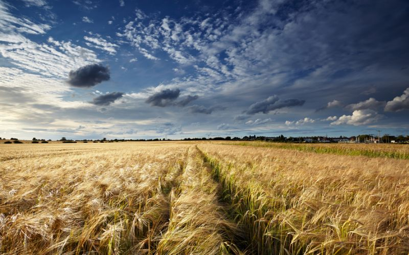 Field Clouds wheat grass sky clouds landscape wallpaper