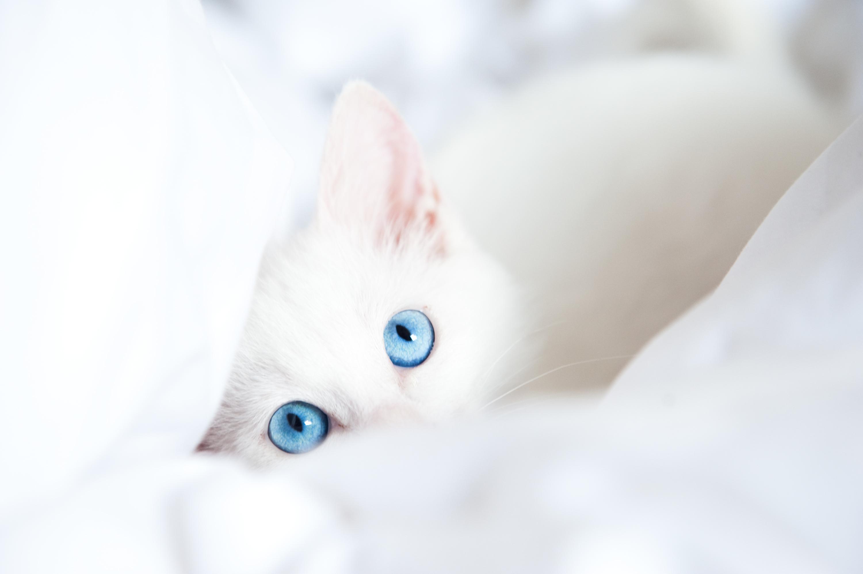 Cats Eyes Glance White Animals Kitten Kittens Baby Wallpaper 3000x1996 126890 Wallpaperup