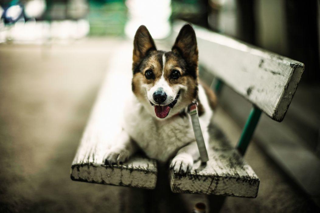 Dogs Bench Glance Animals wallpaper
