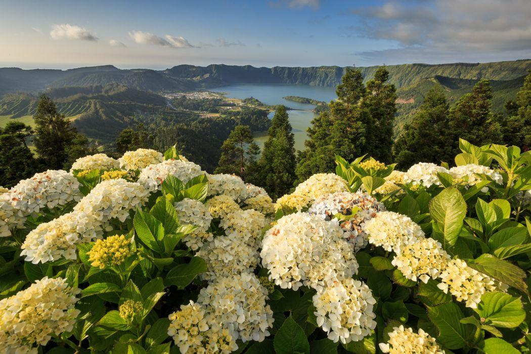 Portugal hydrangeas mountain landscape lake wallpaper