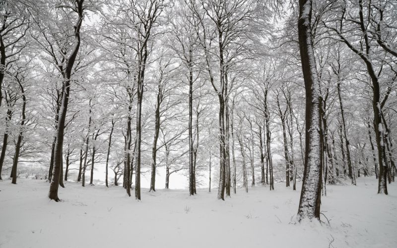 England wood trees snow winter nature wallpaper