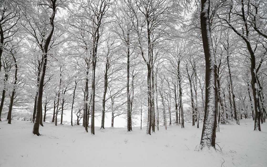 England wood trees snow winter nature wallpaper