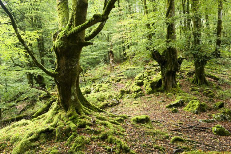 forest trees moss wallpaper