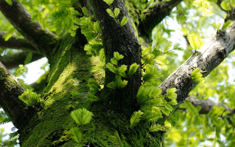 tree branches leaves moss trunk wallpaper