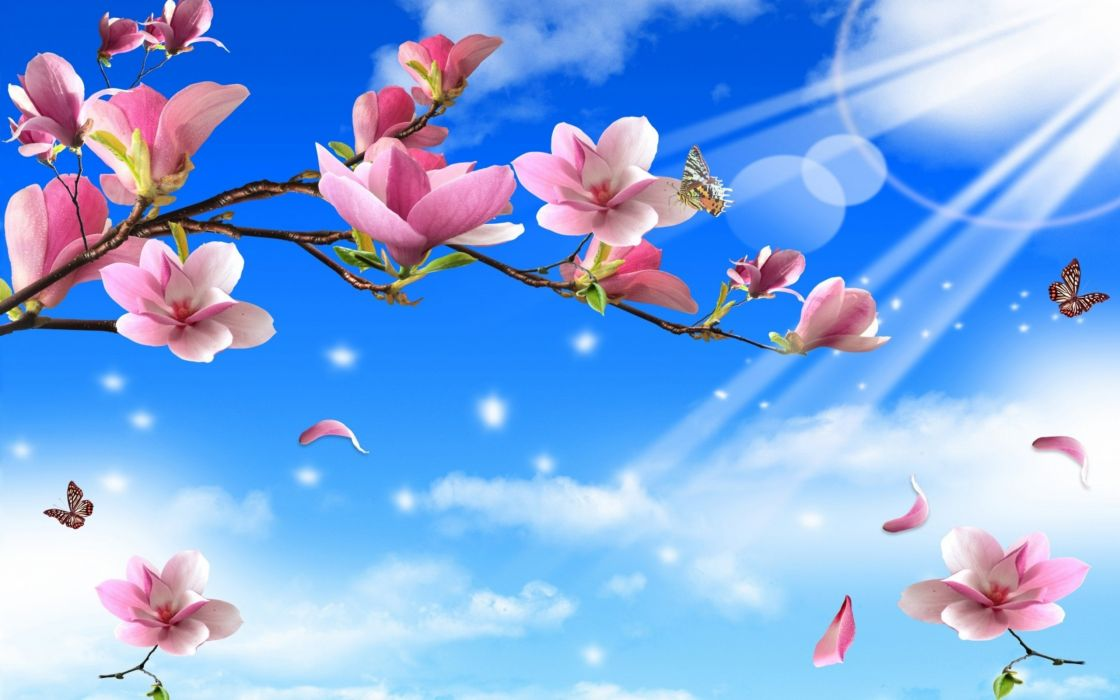 Flowers Erflies Nature Twigs Erfly Wallpaper