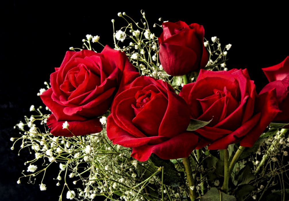 Roses Red Flowers bouquet wallpaper