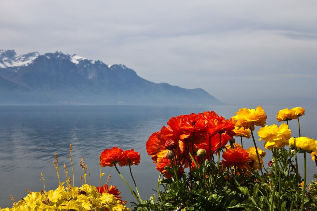 Scenery Switzerland Mountains Montreux Nature Flowers wallpaper