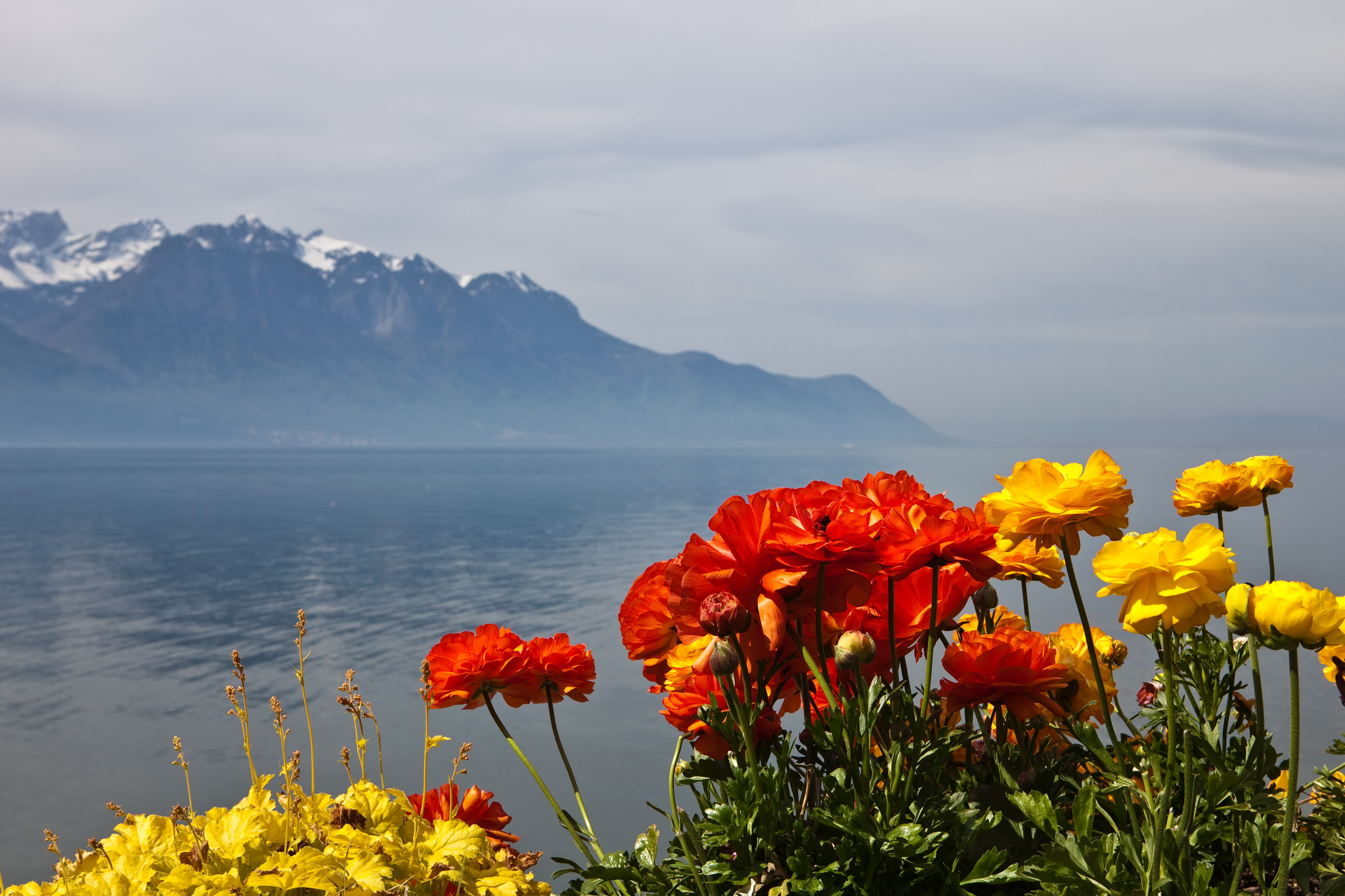 Scenery Switzerland Mountains Montreux Nature Flowers wallpaper ...