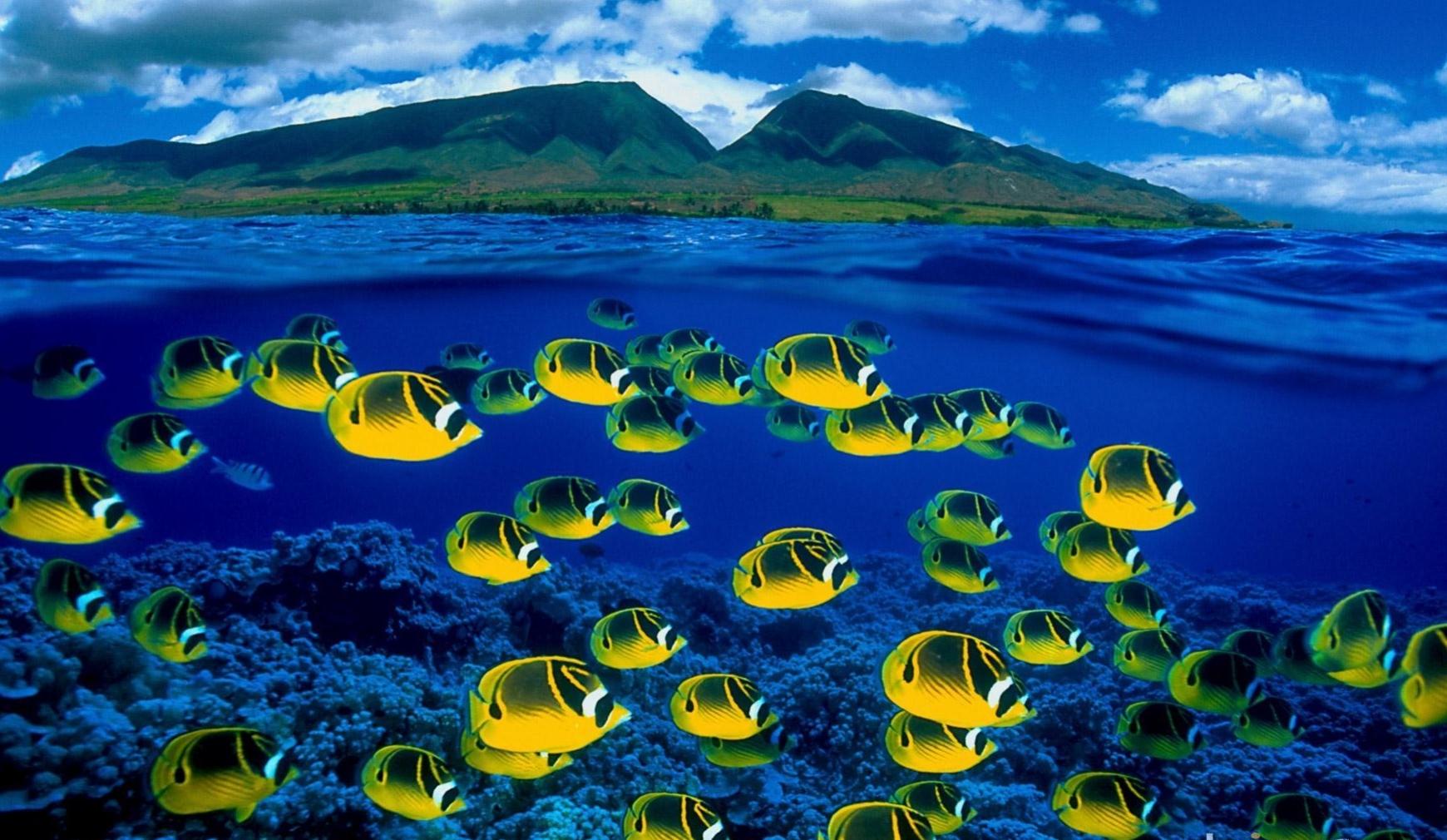 Animal Fish Tropical Underwater Ocean Bokeh Wallpaper