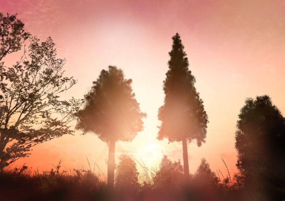 original grass hono mochizuki landscape original scenic silhouette sky sunset tree wallpaper