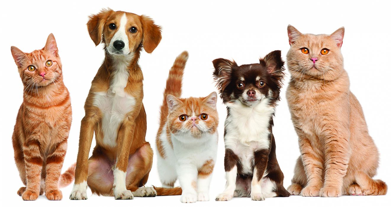 cats dogs pets wallpaper