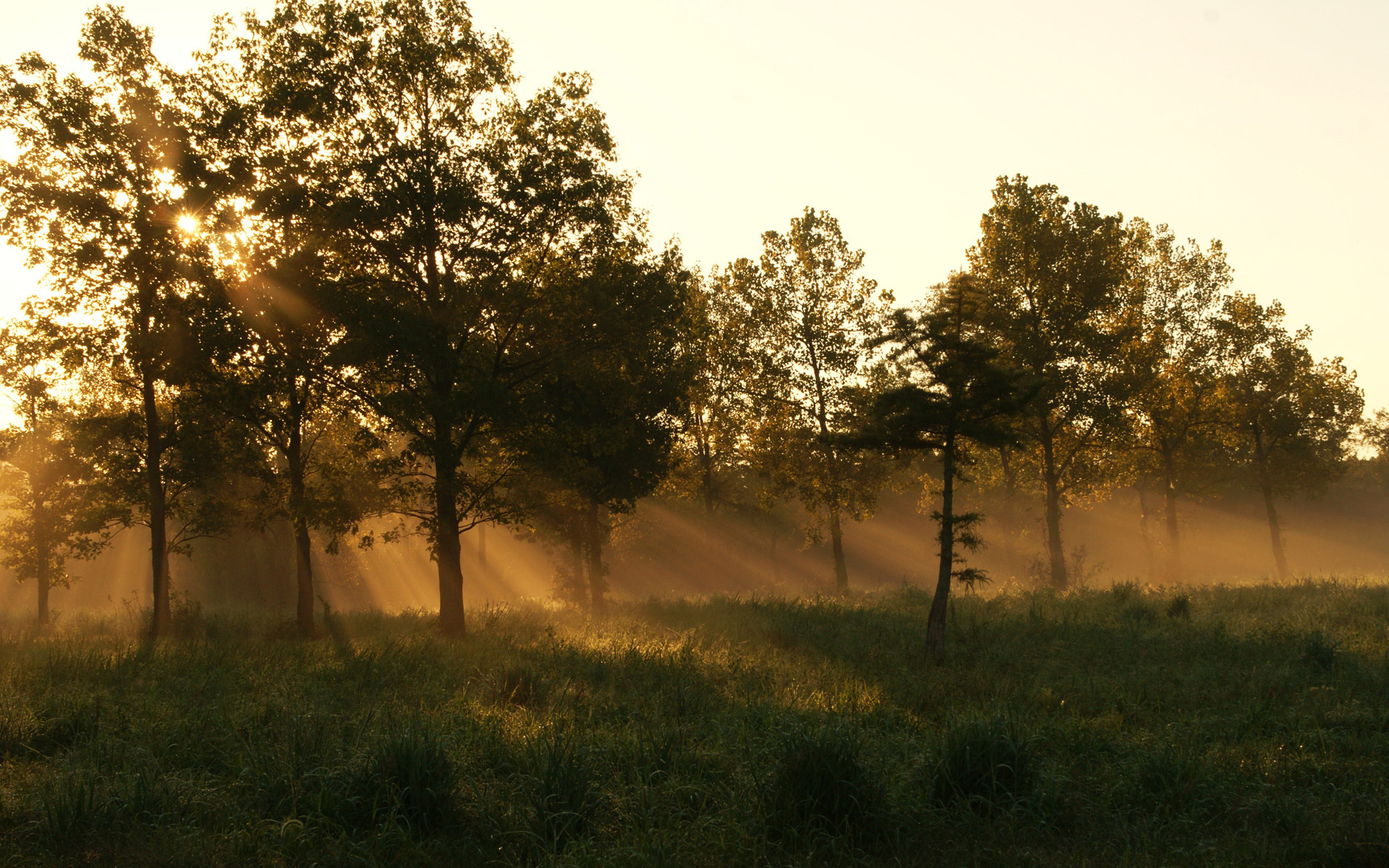 summer morning forest trail - photo #13