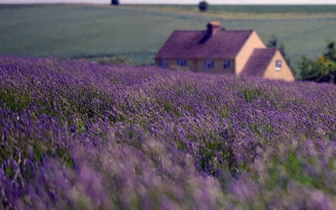 nature England house field lavender sky clouds wallpaper