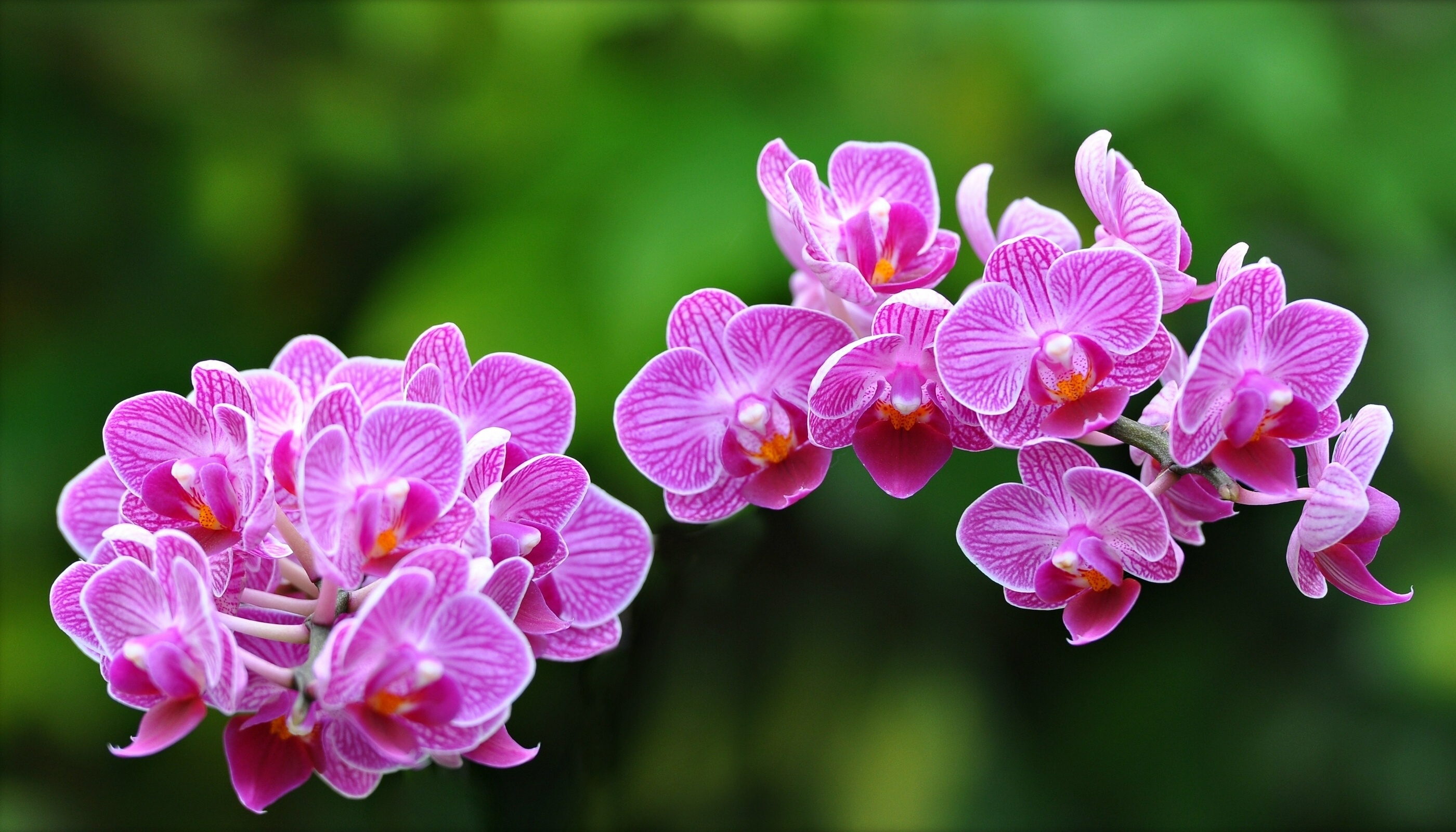 Orchids In Water Wallpaper