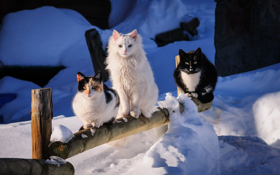 trio winter snow wallpaper