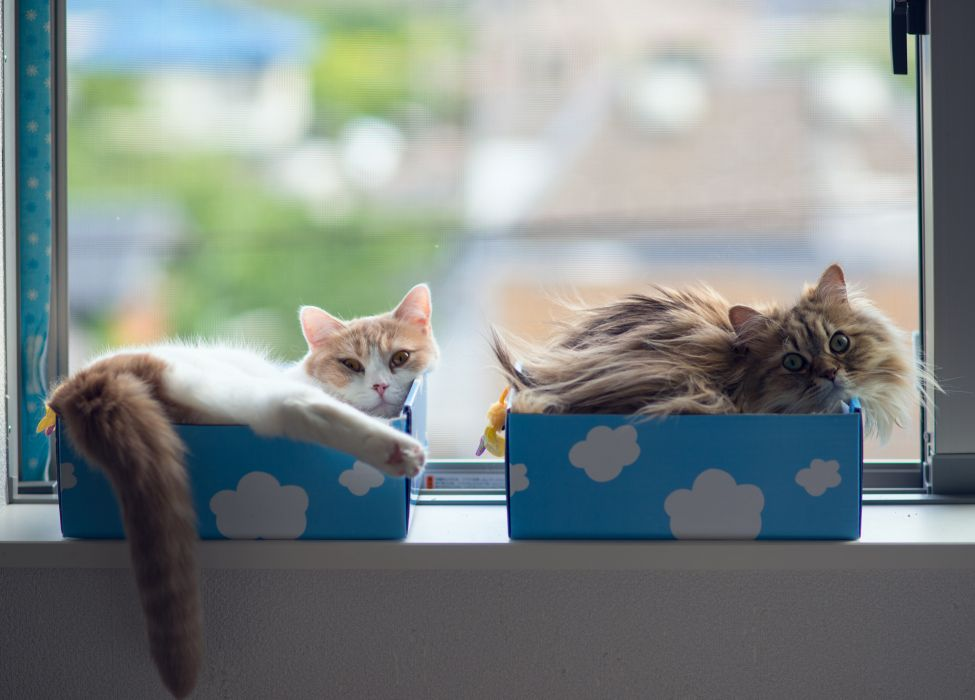 cats window boxes wallpaper