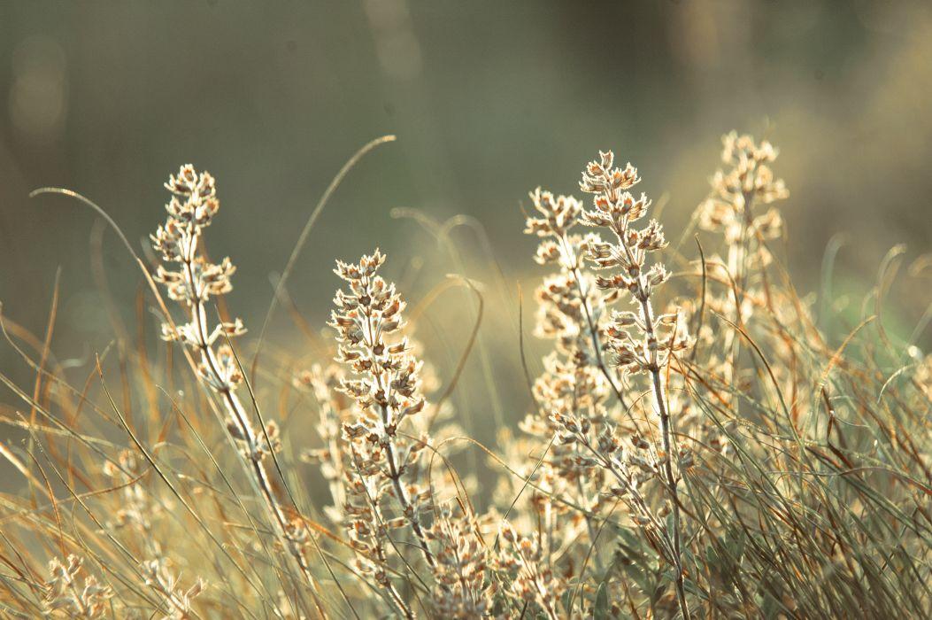 Morning  dew  light  glare  macro  glow  plant  field bokeh wallpaper