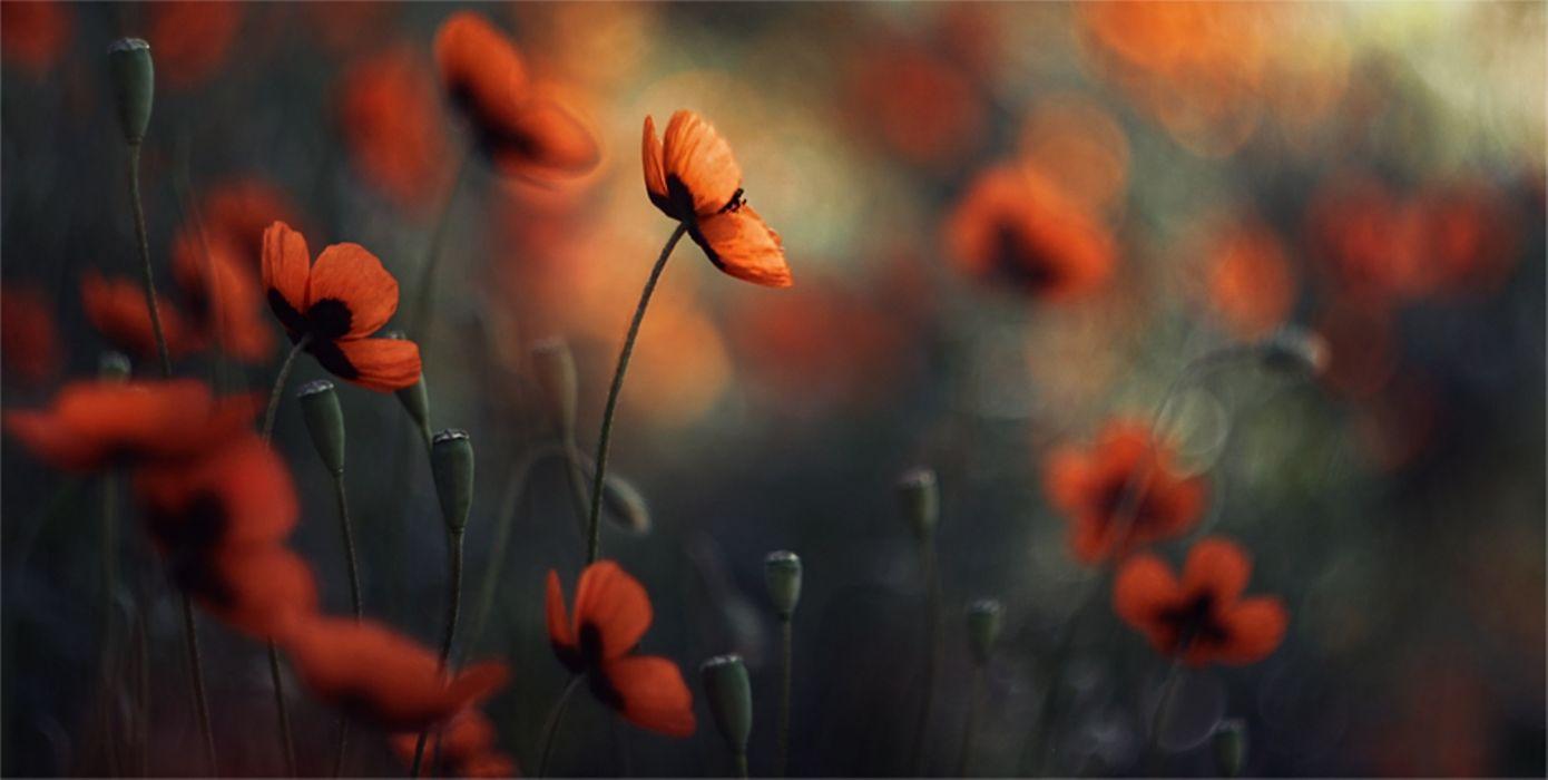flowers mood macro bokeh wallpaper