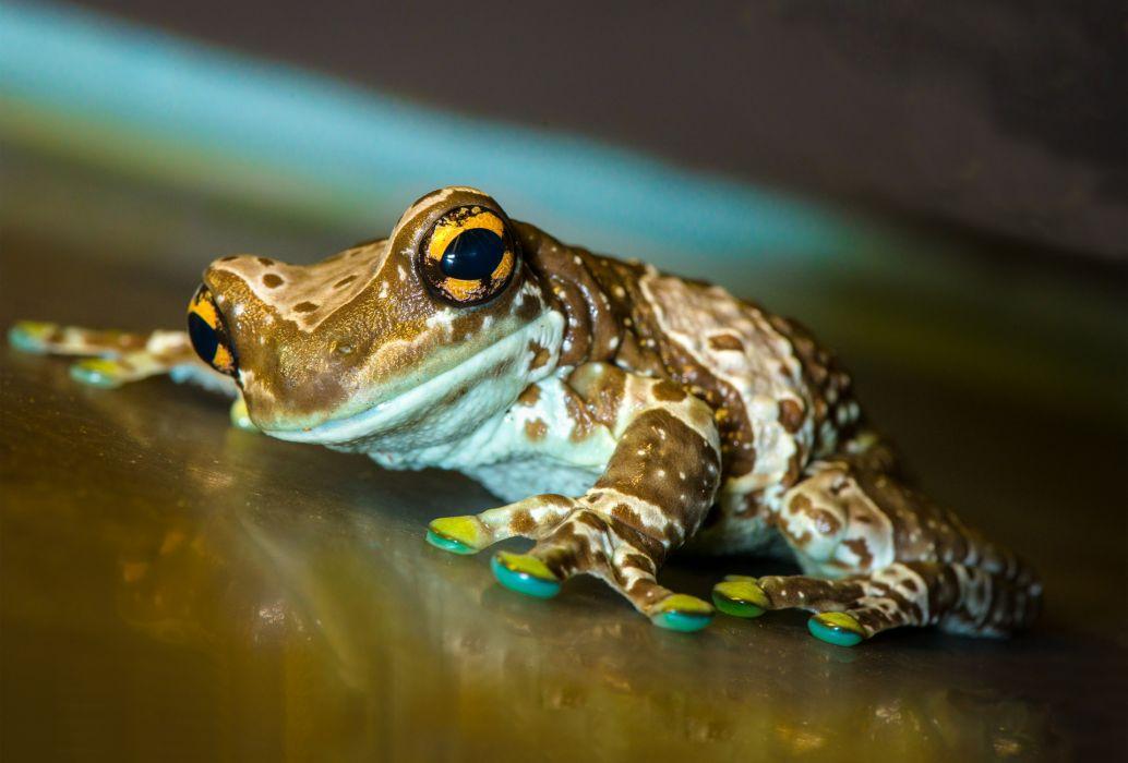 frog  macro  surface  nature reflection wallpaper