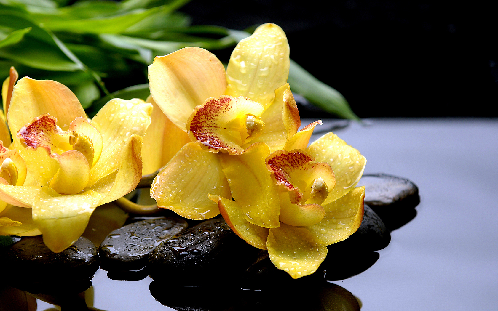 Flowers Orchid Water Drops Water Yellow wallpaper