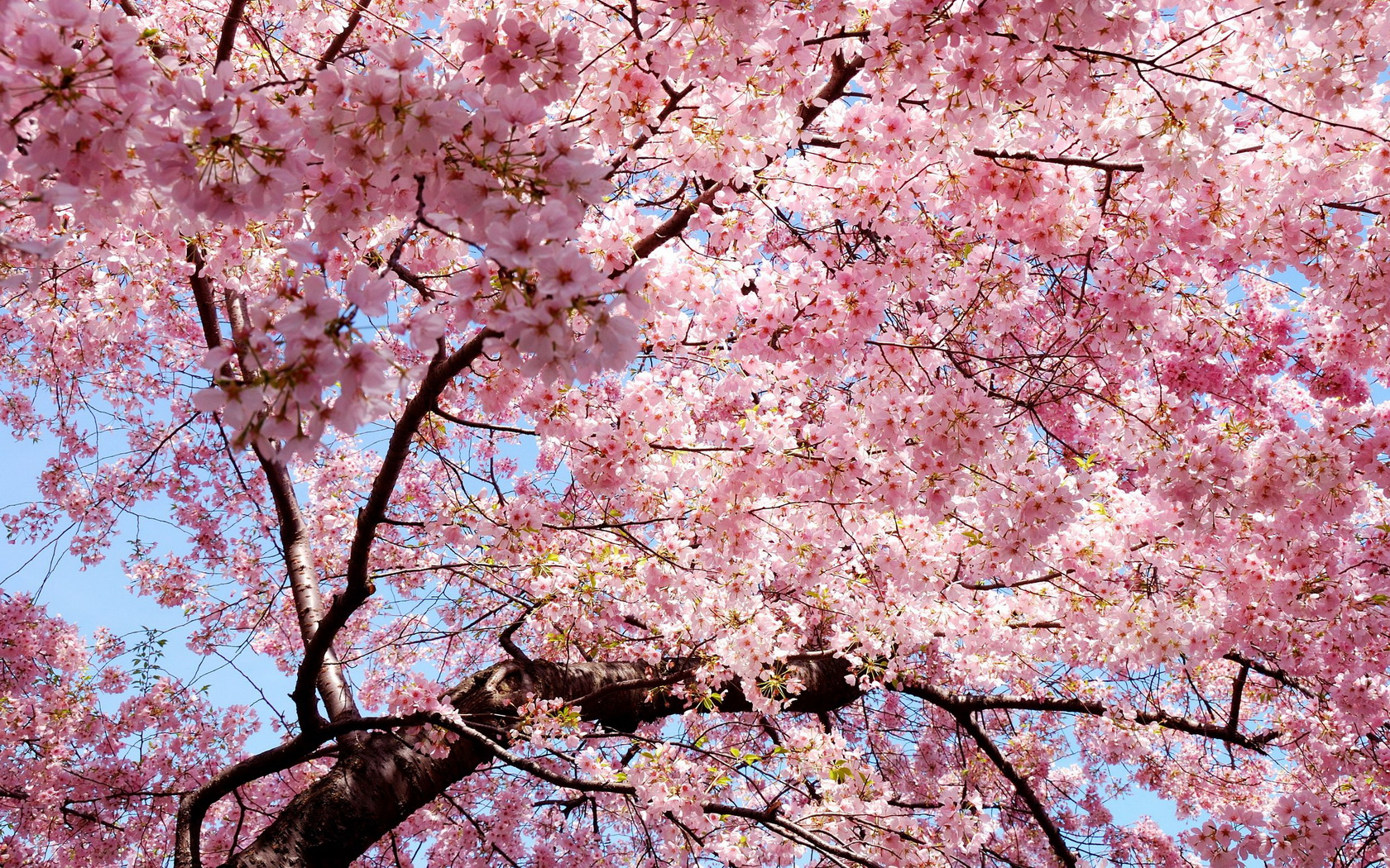 Flowers Tree Branches Pink wallpaper