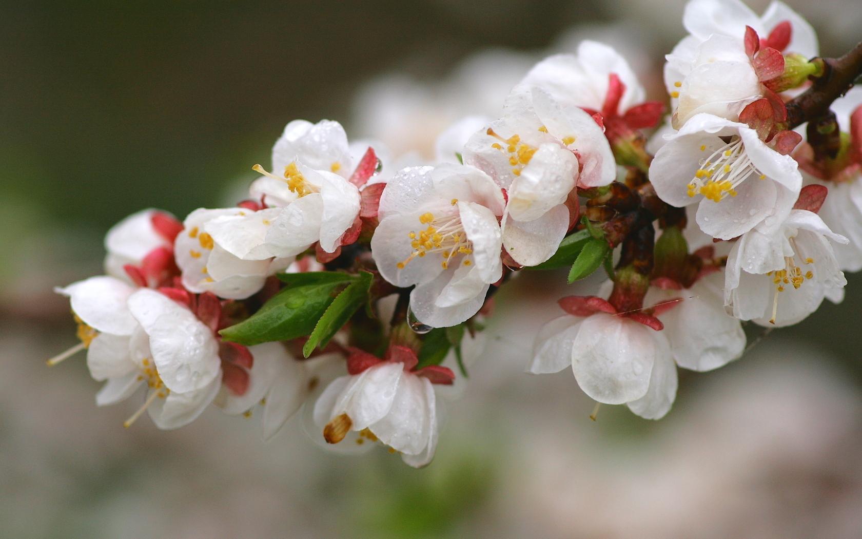 Тройные картинки цветы 3