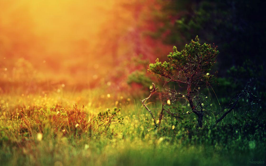 nature forest grass light tree wallpaper